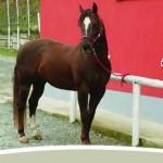 Cavallo 05bis